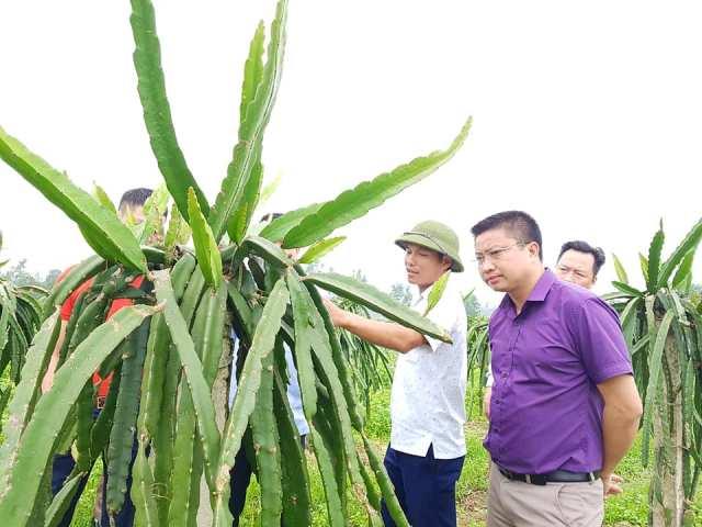 Đoàn viên thanh niên Thạch Hà lập nghiệp trên mảnh đất quê hương