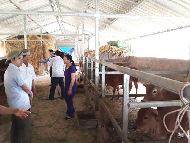 Đồng chí Bùi Nhân Sâm, Chủ tịch Hội Nông dân tỉnh (bên trái) thăm mô hình chăn nuôi bò nhốt do Hội Nông dân hỗ trợ thành lập tại xã Sơn Giang, huyện Hương Sơn