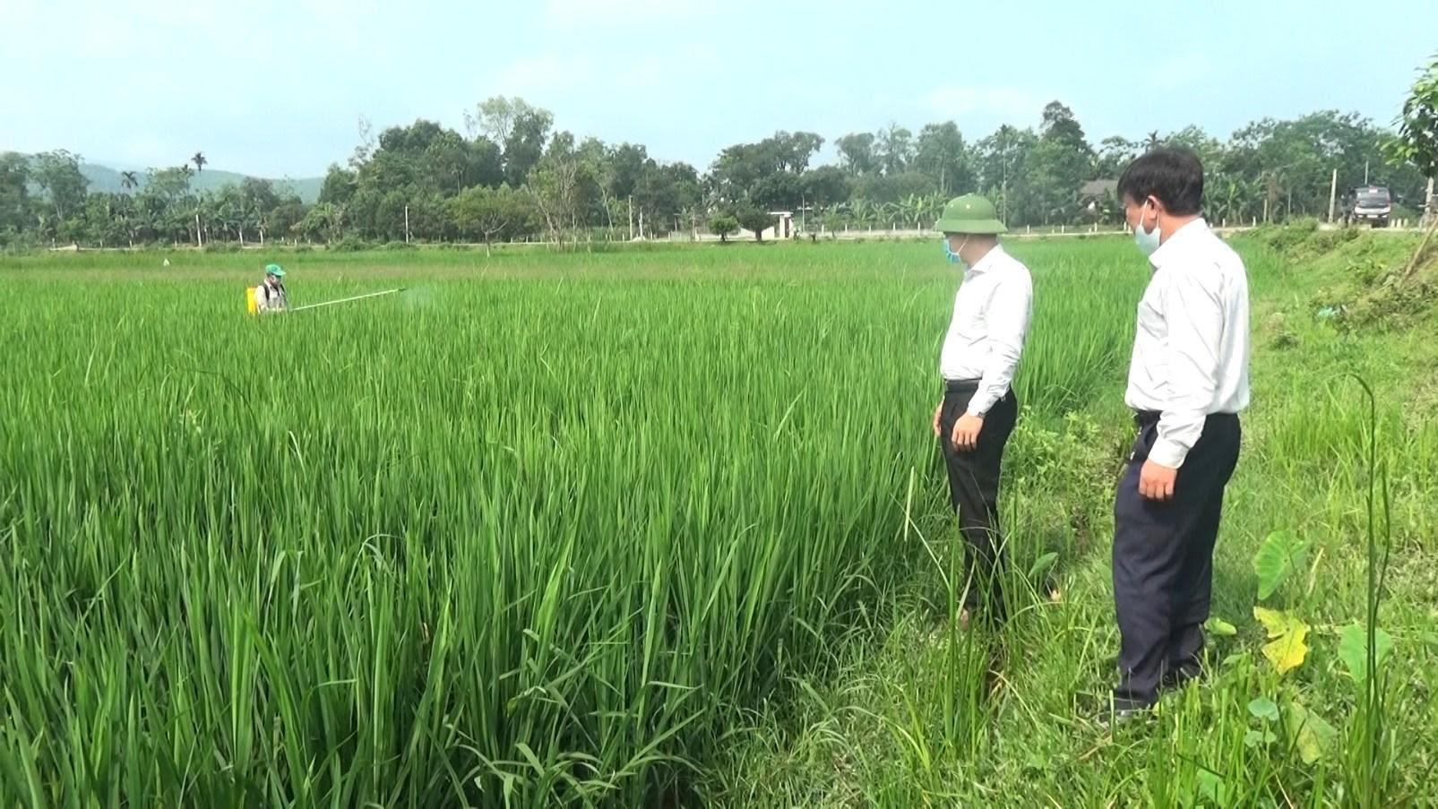 Hương Sơn tập trung chăm sóc cây trồng vụ Xuân 2020
