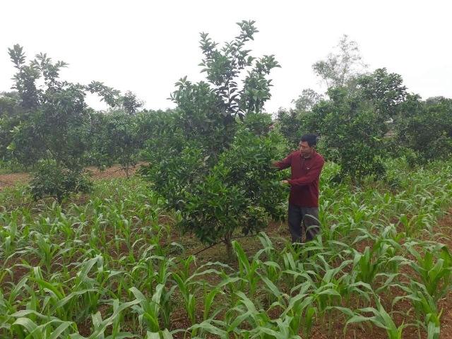Đổi thay ở xã Phú Gia sau 10 năm thực hiện Nghị quyết Trung ương 7 khóa X về nông nghiệp, nông dân, nông thôn