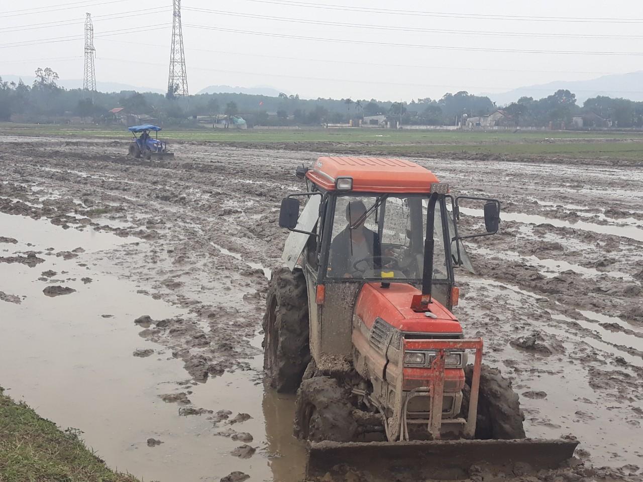 Đẩy mạnh cơ cấu lại nông nghiệp, hình thành nhiều cánh đồng mẫu lớn